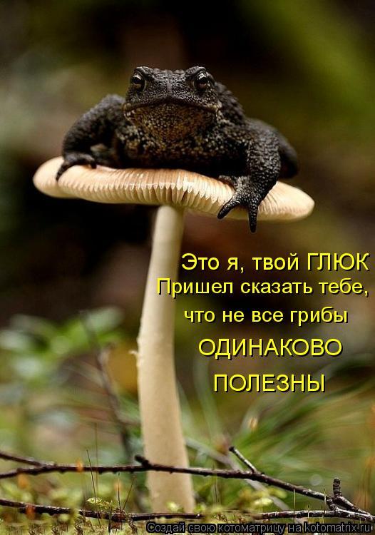 Котоматрица: Это я, твой ГЛЮК Пришел сказать тебе, что не все грибы ОДИНАКОВО  ПОЛЕЗНЫ