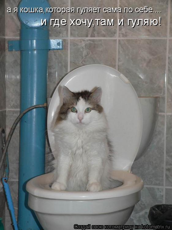 Котоматрица: а я кошка,которая гуляет сама по себе.... и где хочу,там и гуляю!