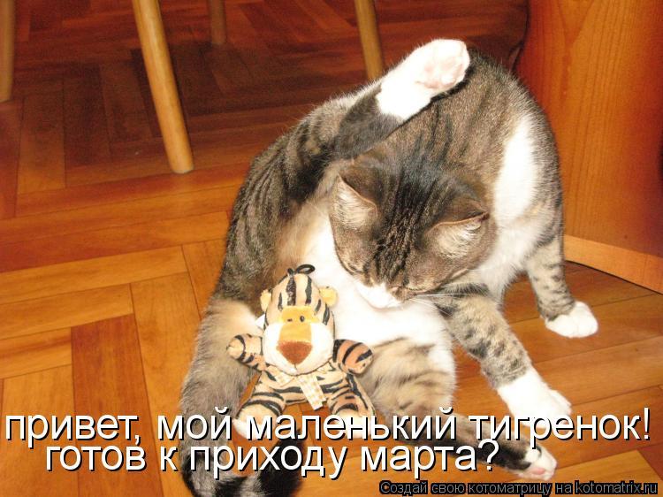 Котоматрица: готов к приходу марта? привет, мой маленький тигренок!