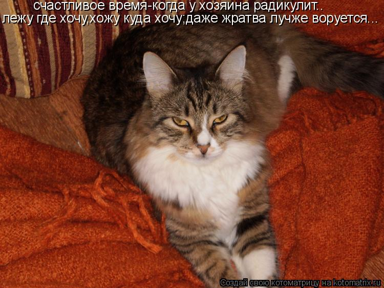 Котоматрица: счастливое время-когда у хозяина радикулит.. лежу где хочу,хожу куда хочу;даже жратва лучже воруется...