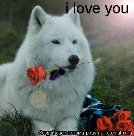 Котоматрица: i love you