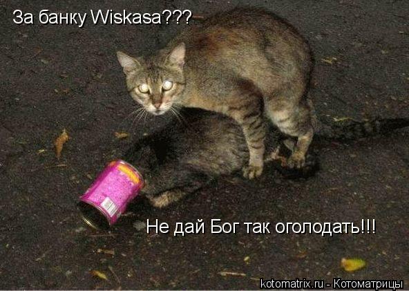 Котоматрица: За банку Wiskasa??? Не дай Бог так оголодать!!!