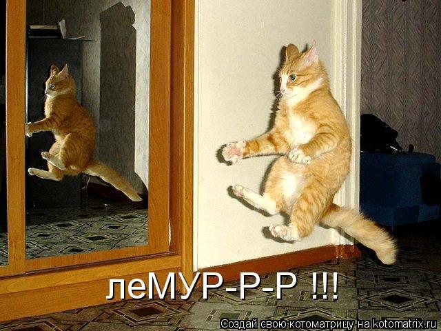 Котоматрица: леМУР-Р-Р !!!