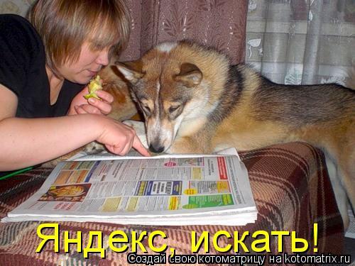 Котоматрица: Яндекс, искать!