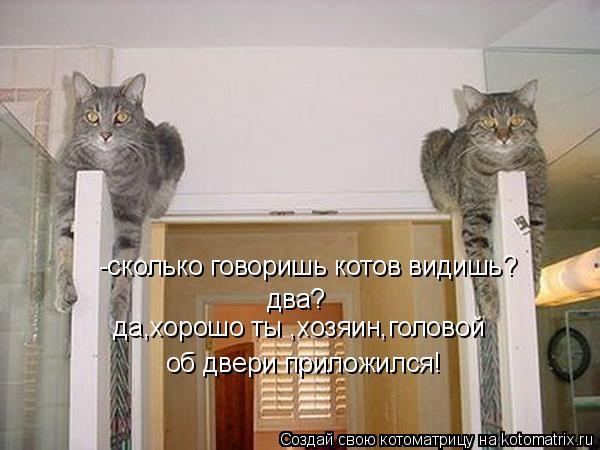 Котоматрица: -сколько говоришь котов видишь? два? да,хорошо ты ,хозяин,головой об двери приложился!