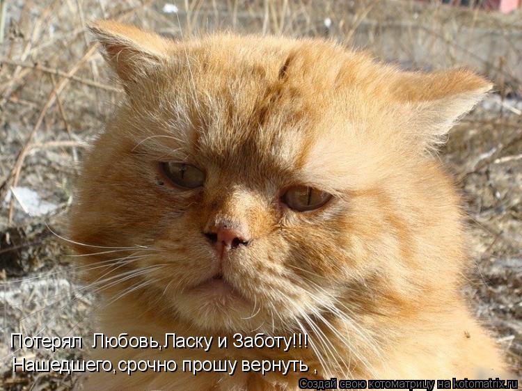 Котоматрица: Потерял  Любовь,Ласку и Заботу!!! Нашедшего,срочно прошу вернуть ,