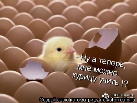 Котоматрица: - Ну а теперь,  мне можно курицу учить !?