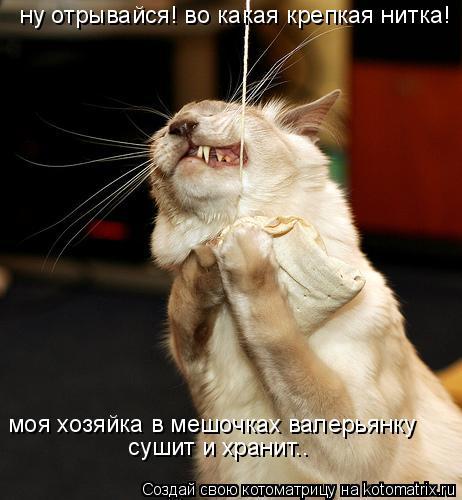 Котоматрица: ну отрывайся! во какая крепкая нитка! моя хозяйка в мешочках валерьянку  сушит и хранит..