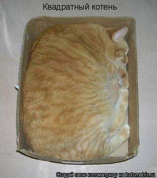 Котоматрица - Квадратный котень