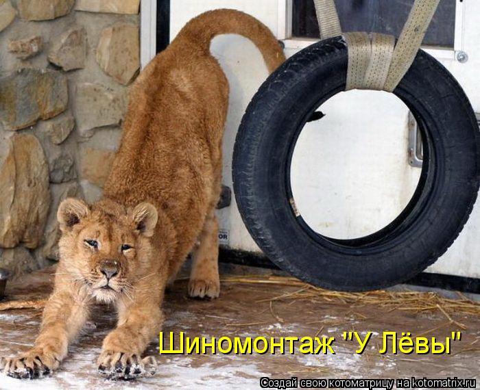 """Котоматрица: Шиномонтаж """"У Лёвы"""""""