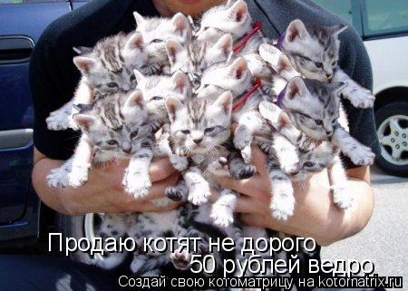 Котоматрица: Продаю котят не дорого 50 рублей ведро