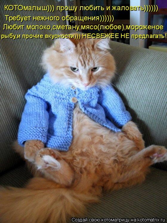 Котоматрица: КОТ КОТОмалыш))) прошу любить и жаловать)))))) Требует нежного обращения)))))) Любит молоко,сметану,мясо(любое),мороженое рыбу,и прочие вкусност