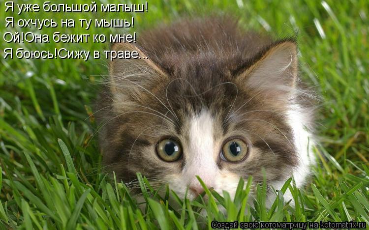Котоматрица: Я уже большой малыш! Я охчусь на ту мышь! Ой!Она бежит ко мне! Я боюсь!Сижу в траве...