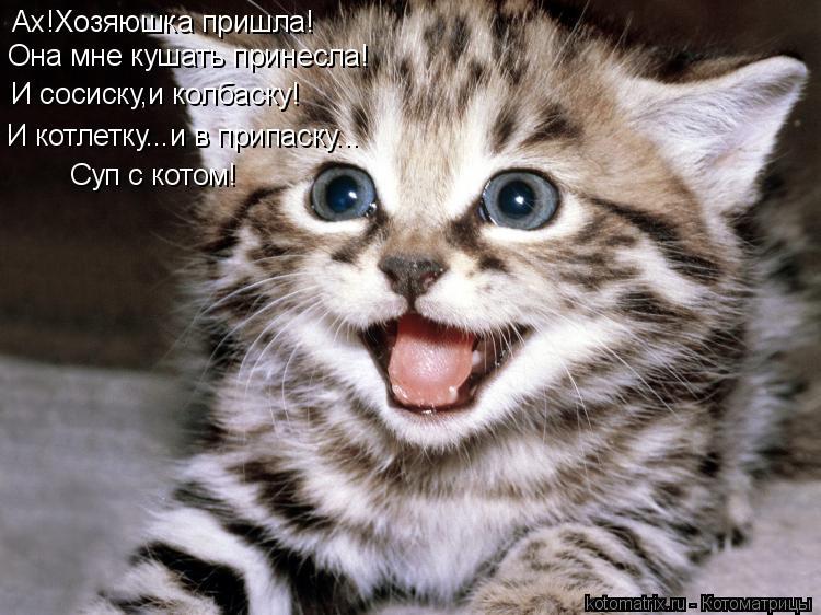 Котоматрица: Ах!Хозяюшка пришла! Она мне кушать принесла! И сосиску,и колбаску! И котлетку...и в припаску... Суп с котом!