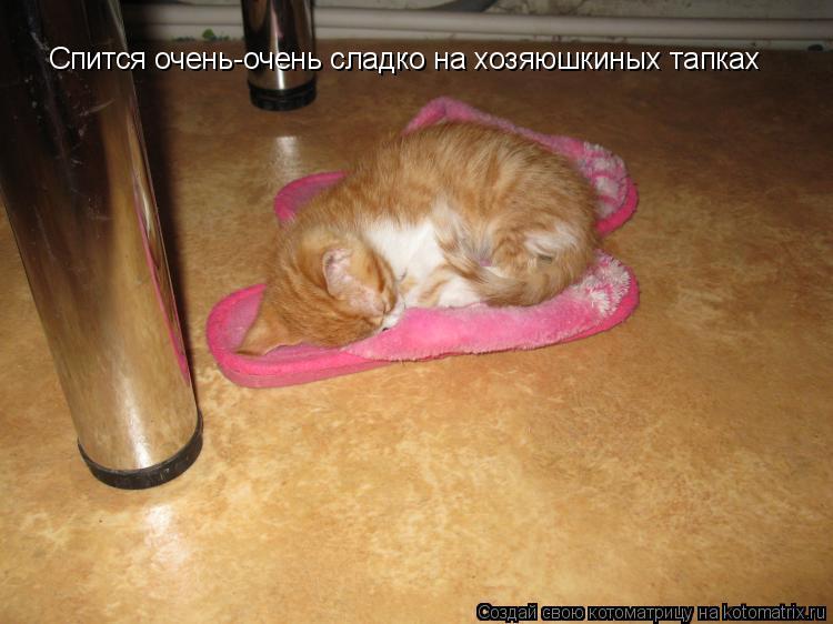 Котоматрица: Спится очень-очень сладко на хозяюшкиных тапках