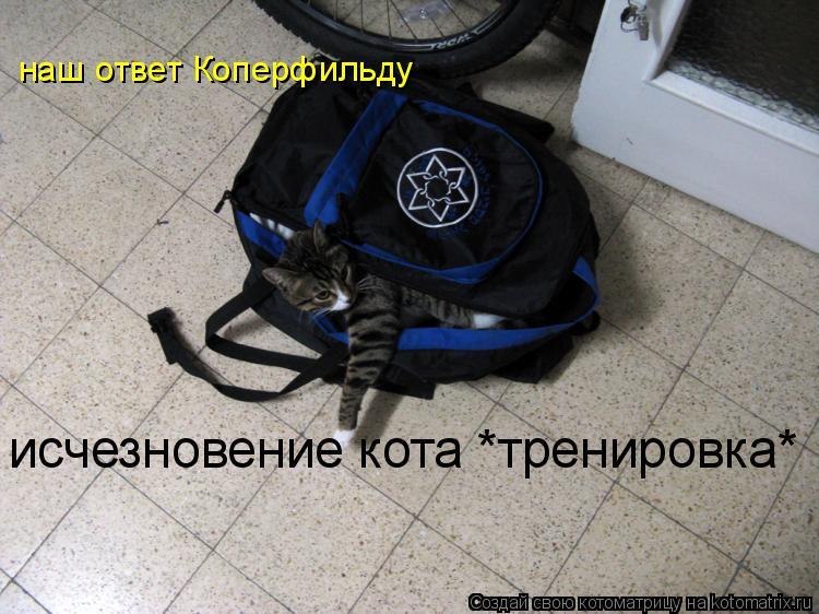 Котоматрица: наш ответ Коперфильду исчезновение кота *тренировка*