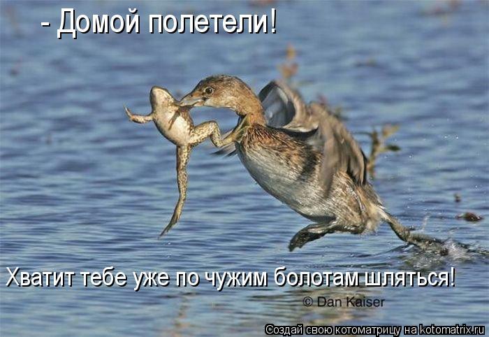 Котоматрица: - Домой полетели! Хватит тебе уже по чужим болотам шляться!