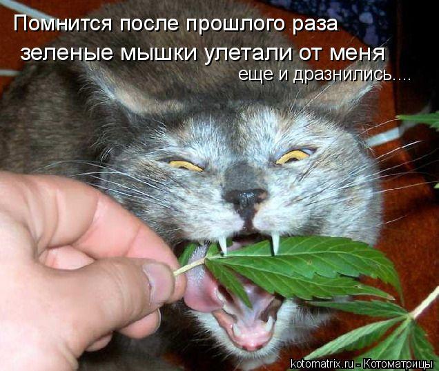 Котоматрица: Помнится после прошлого раза еще и дразнились.... зеленые мышки улетали от меня