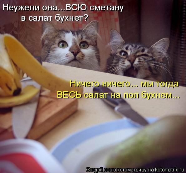 Котоматрица: Неужели она...ВСЮ сметану в салат бухнет? Ничего ничего... мы тогда ВЕСЬ салат на пол бухнем...