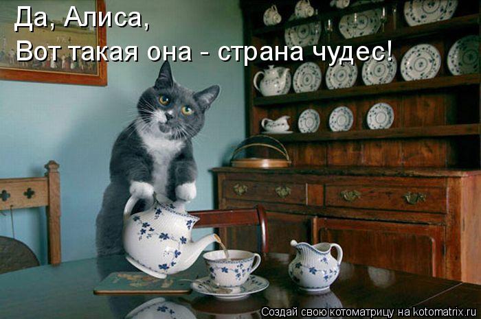 Котоматрица: Да, Алиса, Вот такая она - страна чудес!