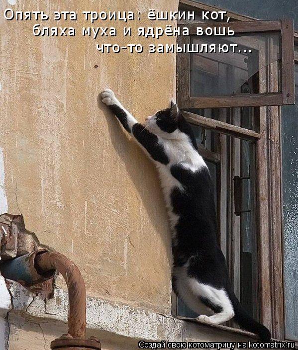 Опять эта троица: ёшкин кот,  бляха муха и ядрёна вошь что-то замышляют...