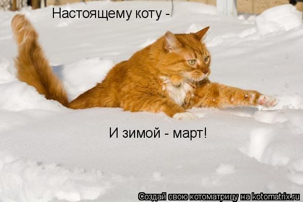 Котоматрица: Настоящему коту - И зимой - март!