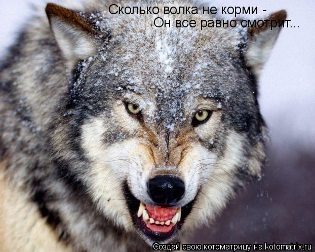 Котоматрица: Сколько волка не корми - Он все равно смотрит...