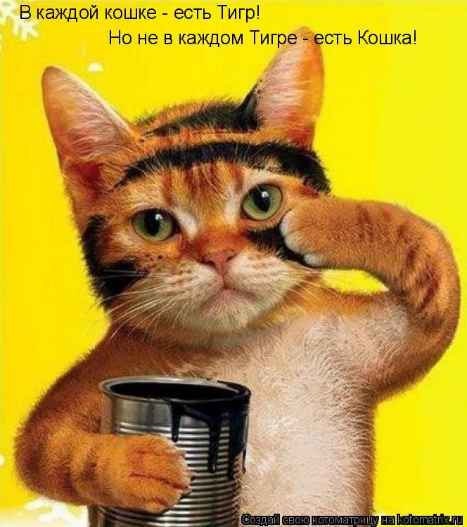 Котоматрица: В каждой кошке - есть Тигр! Но не в каждом Тигре - есть Кошка!