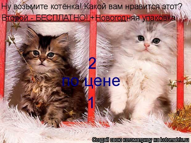 Котоматрица: Второй - БЕСПЛАТНО! +Новогодняя упаковка 2 по цене 1 Ну возьмите котёнка! Какой вам нравится этот?