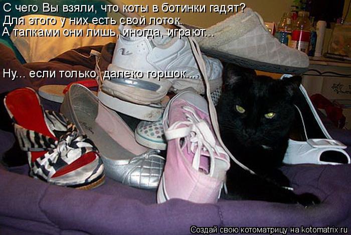 Котоматрица: С чего Вы взяли, что коты в ботинки гадят? Для этого у них есть свой лоток. А тапками они лишь, иногда, играют….. Ну….. если только, далеко горш