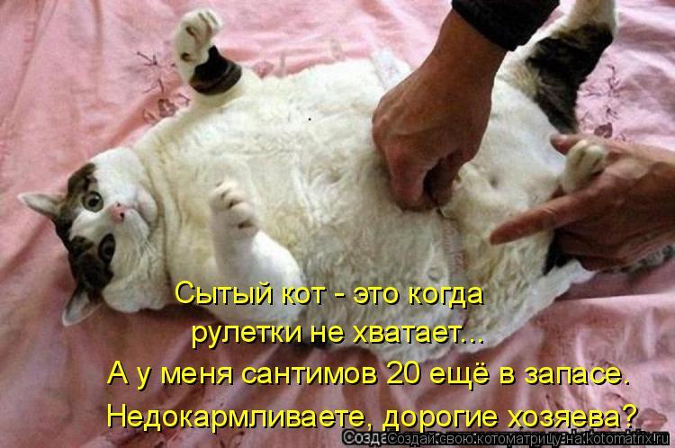Котоматрица: Сытый кот - это когда рулетки не хватает... А у меня сантимов 20 ещё в запасе. Недокармливаете, дорогие хозяева?