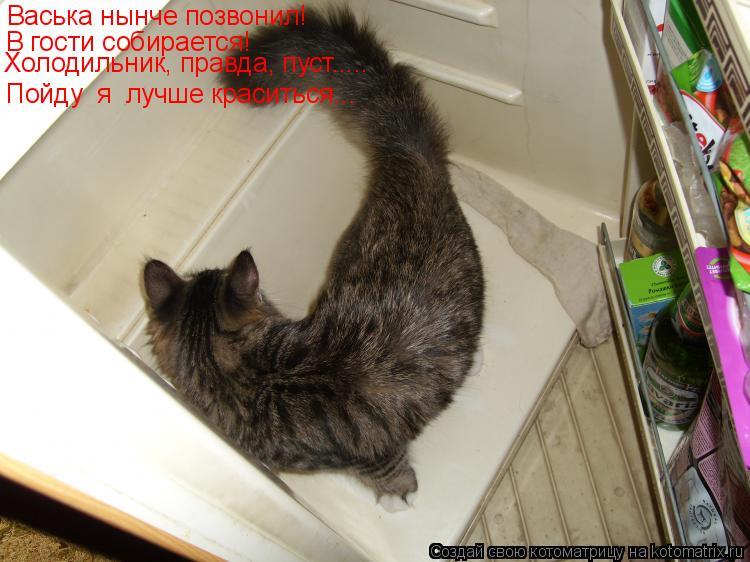 Котоматрица: Васька нынче позвонил! В гости собирается! Пойду  я  лучше краситься….. Холодильник, правда, пуст.....