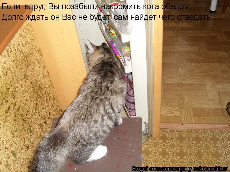 Котоматрица: Если, вдруг, Вы позабыли накормить кота обедом, Долго ждать он Вас не будет, сам найдет чего отведать.....