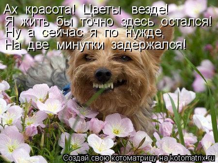 Котоматрица: Ах  красота!  Цветы   везде! Я  жить  бы  точно  здесь  остался! Ну  а  сейчас  я  по  нужде, На  две  минутки  задержался!