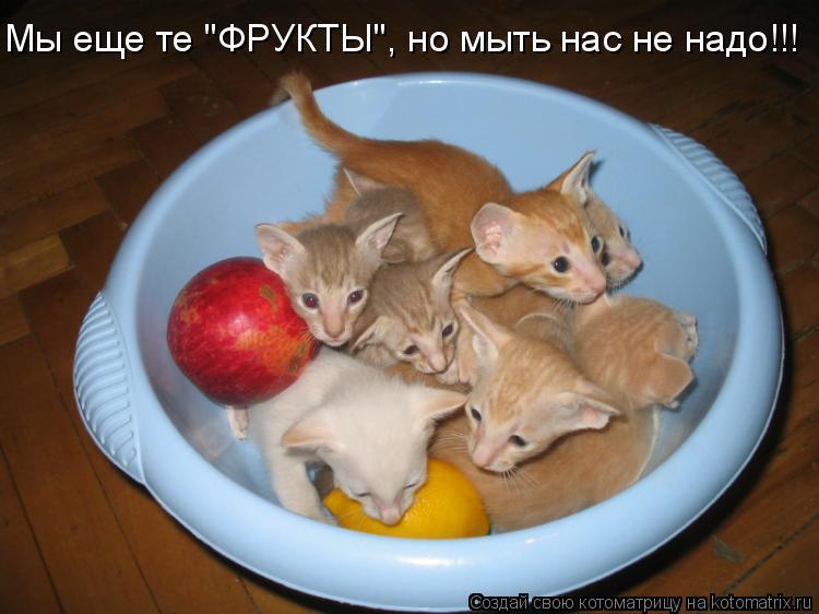 """Котоматрица: Мы еще те """"ФРУКТЫ"""", но мыть нас не надо!!!"""