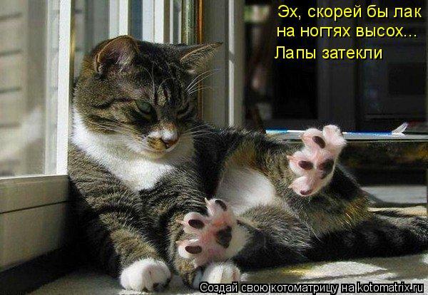 Котоматрица: Эх, скорей бы лак  на ногтях высох...  Лапы затекли