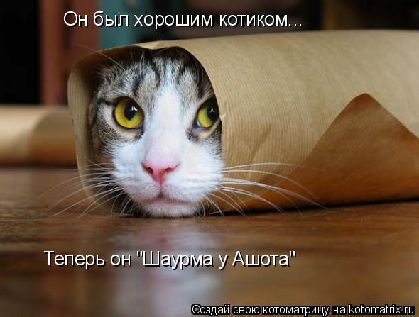 "Котоматрица: Он был хорошим котиком... Теперь он ""Шаурма у Ашота"""