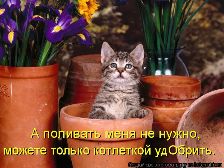 Котоматрица: А поливать меня не нужно, можете только котлеткой удОбрить.
