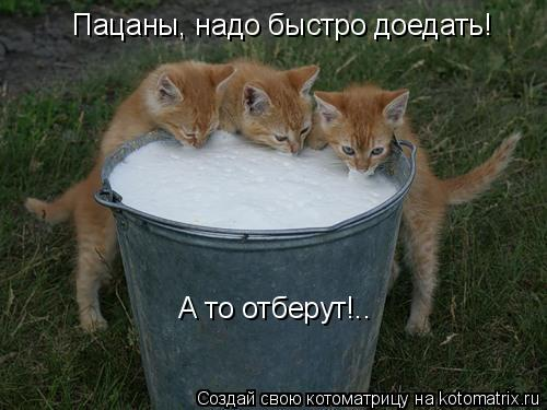 Котоматрица: Пацаны, надо быстро доедать! А то отберут!..