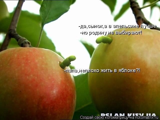 Котоматрица: -папа,неплохо жить в яблоке?! -да,сынок,а в апельсине лучше.. -но родину не выбирают!