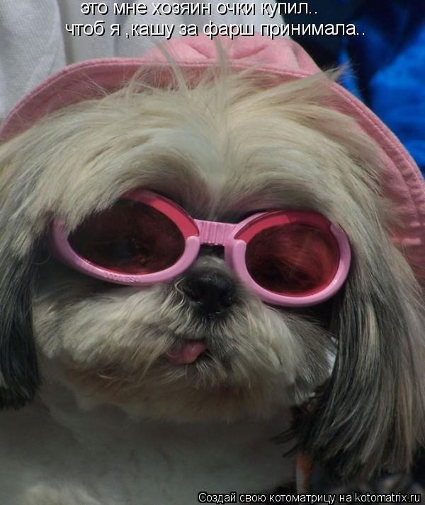 Котоматрица: это мне хозяин очки купил.. чтоб я ,кашу за фарш принимала..