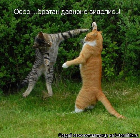 Котоматрица: Оооо....братан давноне виделись!