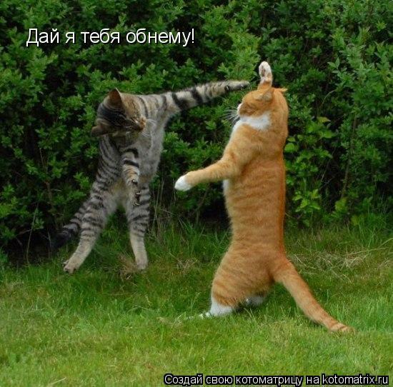 Котоматрица: Дай я тебя обнему!