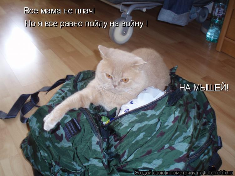 Котоматрица: Все мама не плач! Но я все равно пойду на войну ! НА МЫШЕЙ!