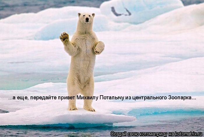 Котоматрица: ...а еще, передайте привет Михаилу Потапычу из центрального Зоопарка...