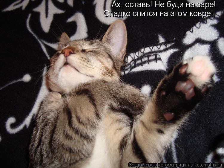 Котоматрица: Ах, оставь! Не буди на заре! Сладко спится на этом ковре!