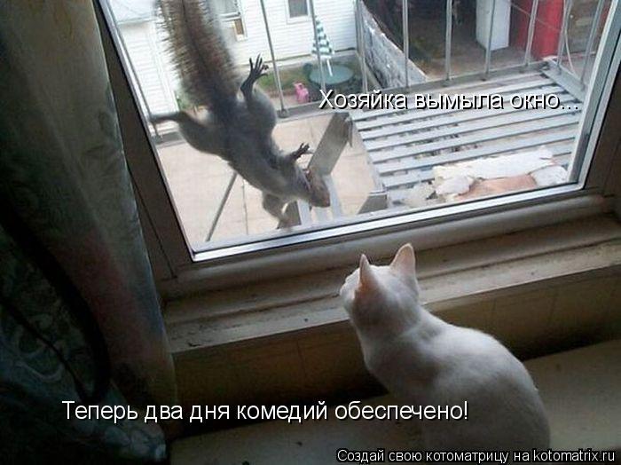 Котоматрица: Хозяйка вымыла окно... Теперь два дня комедий обеспечено!