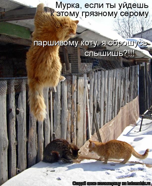 Котоматрица: Мурка, если ты уйдешь к этому грязному серому паршивому коту, я сброшусь слышишь?!!!