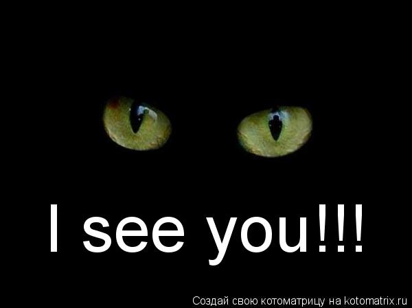 Котоматрица: I see you!!!