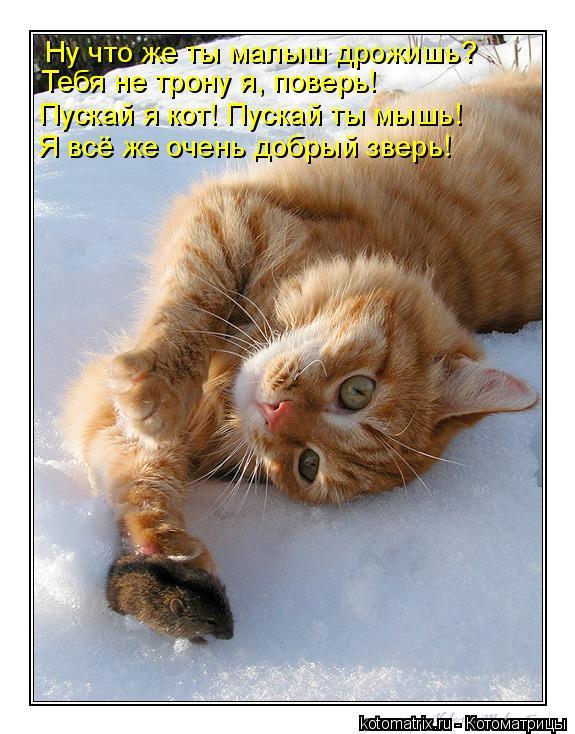 Котоматрица: Ну что же ты малыш дрожишь? Тебя не трону я, поверь! Пускай я кот! Пускай ты мышь! Я всё же очень добрый зверь!